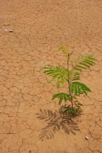 Image courtesy of: numanzaa/freedigitalphotos.net