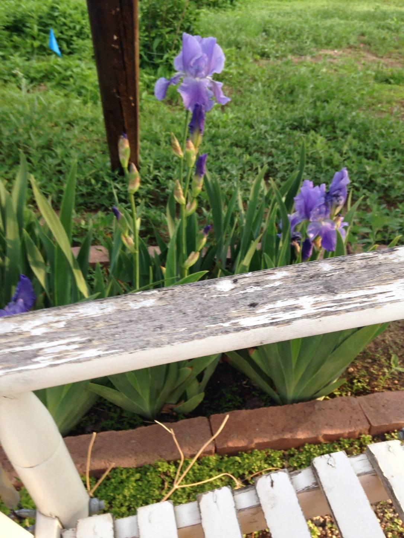 Moms Irises