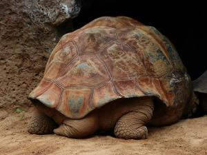 turtle-406977_1280 CC0