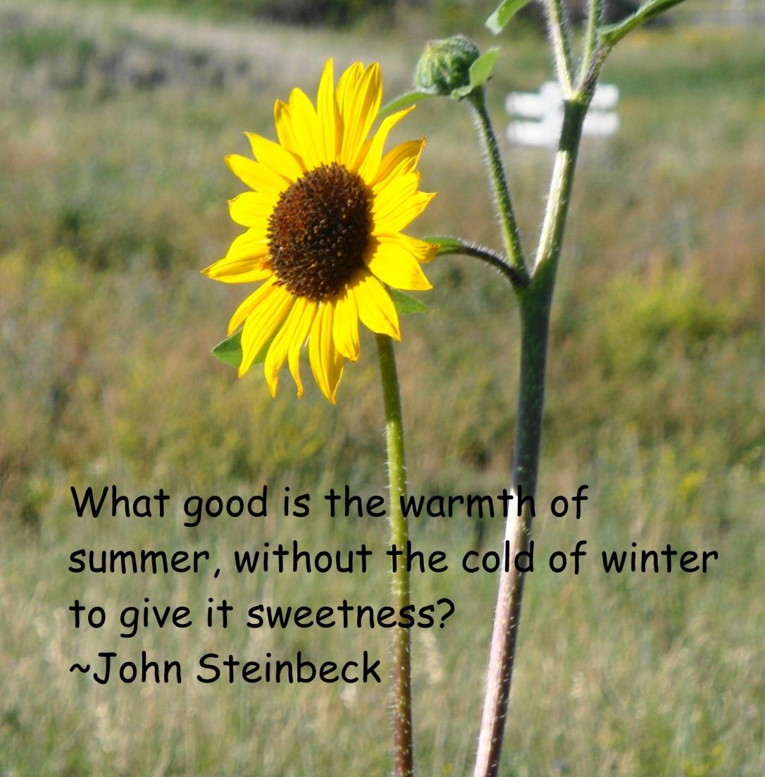 Warmth of Summer Steinbeck Quote