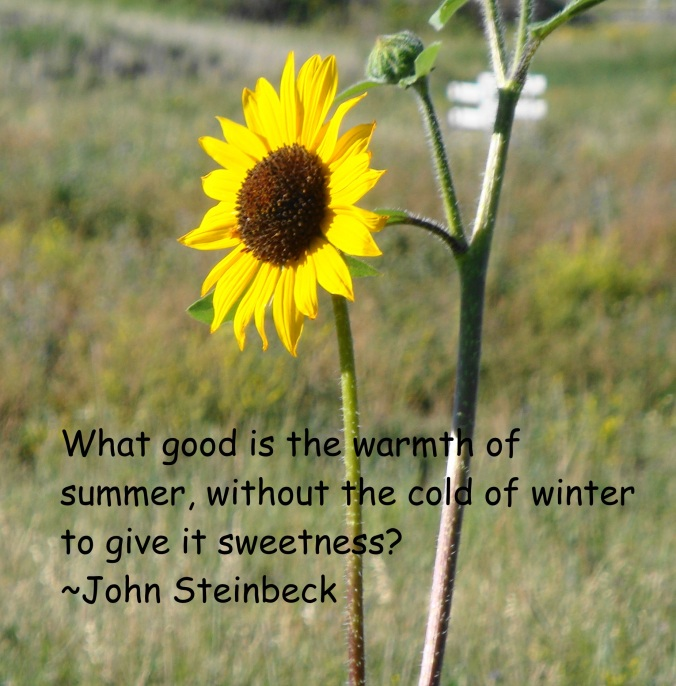 Warmth of Summer Steinbeck Quote
